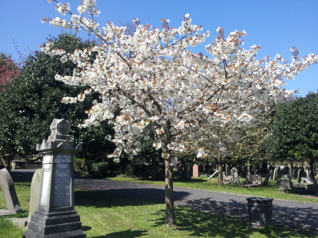 Flowering Tree - Flaybrick Memorial Gardens